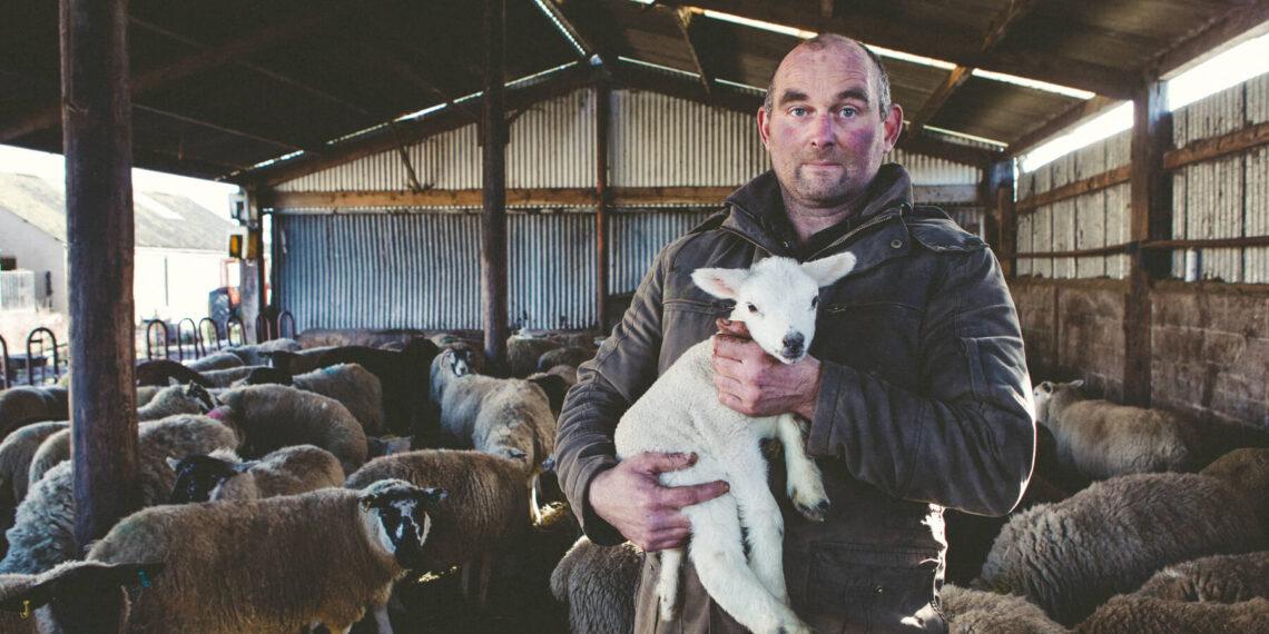 Emergency animal feed bedding Forage Aid 8